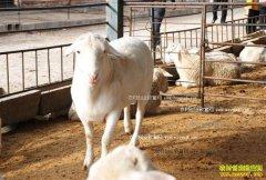 陕西石泉县唐河养殖牛羊年赚16万元