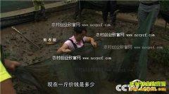 [致富经]湖北荆州熊孝陵养殖青蛙黄粉虫年利润200多万