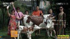 [农广天地]蜀宣花牛为啥牛 蜀宣花牛养殖视频