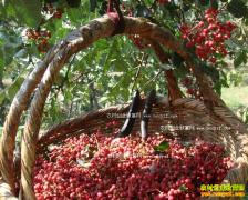 花椒多少钱一斤:2017年2月15日最新花椒价格行情