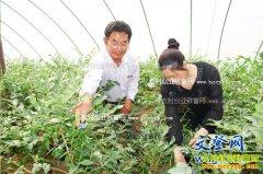 山东文登徐宝兰种植6个蓝莓大棚收入30多万元