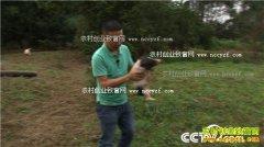 [致富经]重庆江津王波养殖巴马香猪年销600多万元