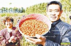 河北衡水石世杰夫妇家庭农场种植低糖枸杞年收入百万元