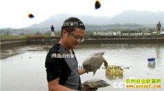 [致富经]安徽旌德汪三三养殖龟鳖三个月净赚一百万