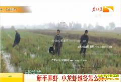 陇上农技站:新手养虾 小龙虾冬季怎么养?