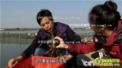 [致富经]江苏苏州俞三男养殖阳澄湖大闸蟹致富视频