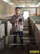 重庆江津王波养殖巴马香猪一头小猪卖两万元