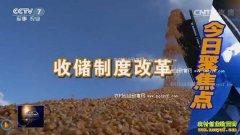 [聚焦三农]玉米啥时候卖才赚钱(下)
