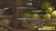 [绿色时空]河南洛宁张建武种植黑核桃变成摇钱树
