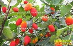 明年种什么果树最赚钱 4个水果品种种植前景分析