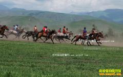 河北沧县王连仲养殖赛马 匹匹都能卖高价