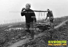 河南孟津县会盟镇:种植莲藕成农民致富好项目