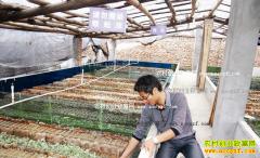 温室大棚养殖蜈蚣技术要点