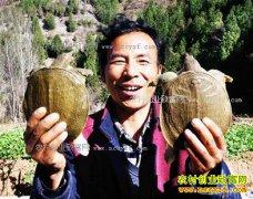 湖北十堰洋溪沟村李席文大棚养殖甲鱼年产值120万元