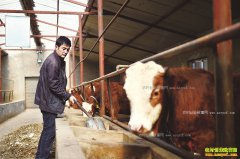 宁夏固原马万武养殖肉牛找到致富路