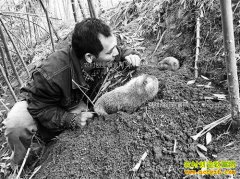 重庆铜梁竹鼠大王刘勇养殖竹鼠年产值200多万元