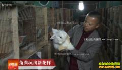 [科技苑]重庆吴同利农场养兔子兔粪玩出新花样