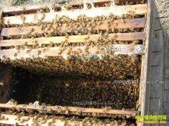 浙江松阳县大学生叶建新养蜂酿土蜂蜜创业致富
