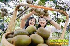 河南西峡县张帆巧借电商畅销猕猴桃