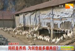 致富好榜样:湖北十堰张启龙养殖乌骨鸡能多赚两倍钱