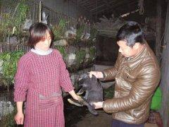 四川泸州郑河村社员养兔子一只净赚30元
