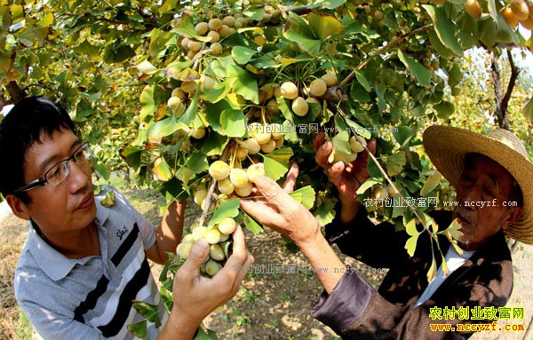 2017年农村种植什么不愁销路-种植小杂果