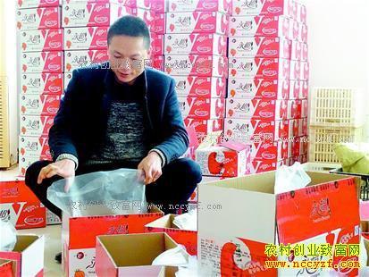 """湖北京山""""80后""""硕士生蔡志雄网上卖红薯年销售额破700万"""