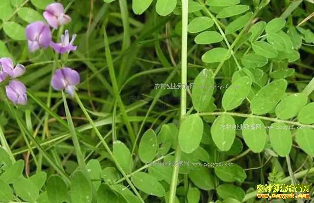 山区适合种植什么中药材?适合山区种植的20个药材品种