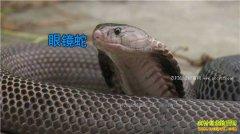 [致富经]江西吉水县刘小平养蛇4年创造千万财富