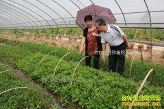 [每日农经]野菜集合:哪些野菜品种可以种植