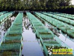 河南汝南周建林生态养鳝鱼300多亩年产值三千多万