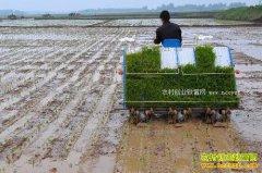 2017年湖南省重点扶持哪些农村致富项目?