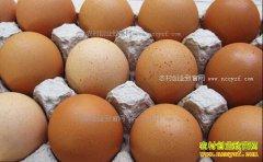 河南鸡蛋价格及行情预测:漯河鸡蛋价格2.4元/斤未来仍会降