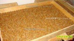 养殖黄粉虫赚钱吗?黄粉虫养殖前景及成本效益分析