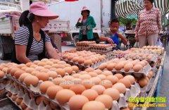 山西潞城鸡蛋价格跌到2.6元 短期蛋价不会回升
