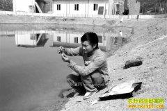 重庆开州张华华养甲鱼效益高 每斤售价150元