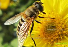 重庆綦江陈云华养蜜蜂年创收2万多元