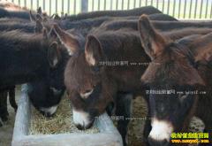 养肉驴赚钱吗?商品肉驴养殖成本和效益分析