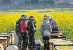 云南龙陵县:养蜂成农民创业致富好项目