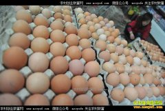 鸡蛋价格还会上涨吗?预计9月份蛋价涨势不减