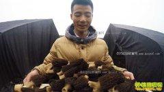[致富经]四川绵阳高基盛种植羊肚菌三年创两千万财富