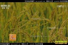 [农广天地]吉林永吉县种粮大户肖建波和他的现代家庭农场
