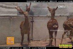 [农广天地]双阳梅花鹿养殖技术视频