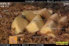 [农广天地]北京门头沟寇红艳生态养殖黄粉虫成就创富路