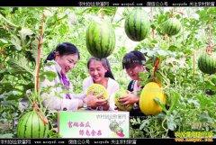 山东沂水县:种植富硒西瓜亩收入四五万元