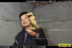 [致富经]湖南长沙李治国养殖毒蛇年销千万元