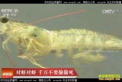 [科技苑]对虾无故死亡是什么原因?