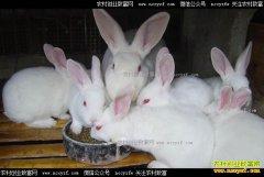 新疆吉木萨尔县张晓璐和曹伟夫妻回乡养殖獭兔走上致富路