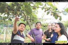 四川马边县郑国银种植猕猴桃年销40万元