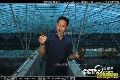 [致富经]浙江湖州杨新权用1000对龙虾赚出1000万元